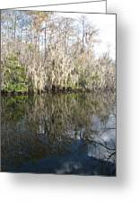 Bold Cypress Reflection Greeting Card