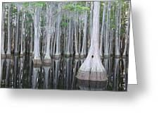 Swampy Reflections Greeting Card