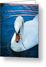 Swan 2 Greeting Card