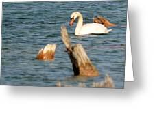 Swan Amid Stumps Greeting Card