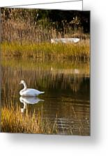 Swan And Boat 2 Greeting Card