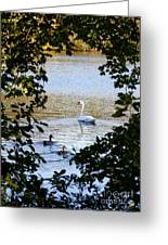 Swan And Ducks Through Trees Greeting Card