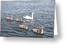 Swan And His Ducklings Greeting Card