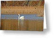 Swan And Swallow Greeting Card