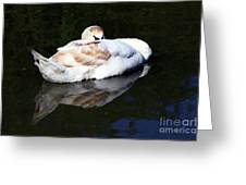 Swan Asleep Greeting Card