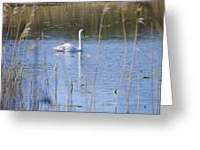 Swan At Derryallen Lough Greeting Card