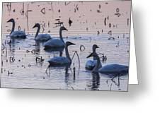 Swan At Dusk Greeting Card