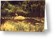 Swan At The Golden Lake Greeting Card