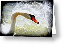 Swan - Beautiful - Elegant Greeting Card