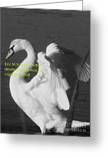 Swan Black And White Greeting Card