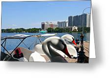 Swan Boats And Buildings Greeting Card