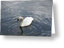 Swan Circles Greeting Card