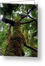 Swan Creek Tree Greeting Card