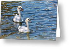 Swan Day Greeting Card