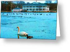 Swan Duck Geese Greeting Card