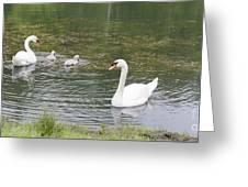 Swan Family Greeting Card by Teresa Mucha