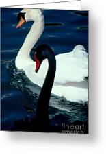 Swan Friends Greeting Card