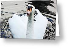 Swan Honk Honk Greeting Card
