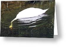 Swan Hunting For Dinner Greeting Card