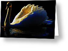 Swan In Golden Light Greeting Card
