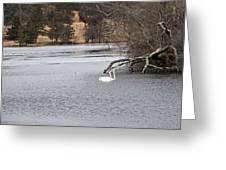 Swan Lake 1 Greeting Card