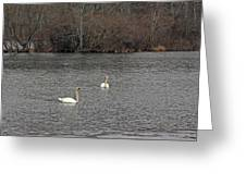 Swan Lake 2 Greeting Card