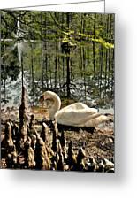 Swan Lake Watercolor Greeting Card