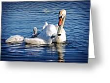 Swan Mom And Cyngets Greeting Card