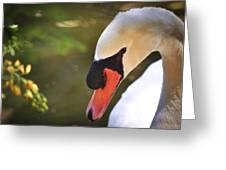 Swan On A Lake Greeting Card