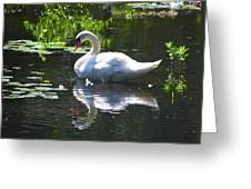 Swan On Lake Sabbatia Greeting Card