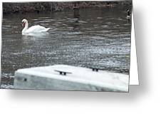 Swan On The Water Greeting Card