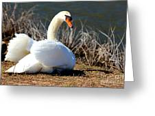 Swan Protects Her Eggs Greeting Card
