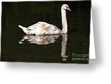 Swan Reflection Greeting Card