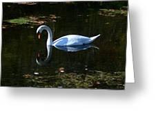 Swan Solitude Greeting Card