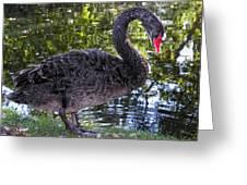 Swan Song Greeting Card