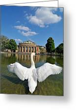 Swan Spreads Wings In Front Of State Theatre Stuttgart Germany Greeting Card