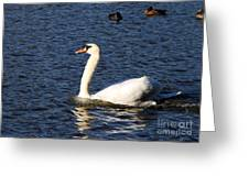 Swan Swim Greeting Card