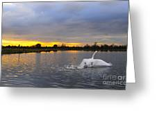 Swan Taking Off Greeting Card