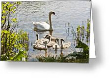 Swan With Signets 2 Greeting Card