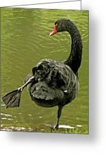 Swan Yoga Greeting Card by Rona Black