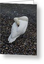 Swan1 Greeting Card