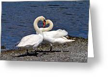 Swans Courting Greeting Card