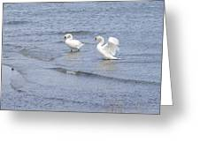 Swans In Denmark Greeting Card