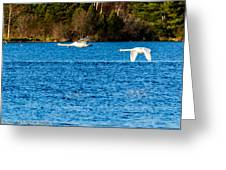 Swans In Flight - Unity Park Greeting Card