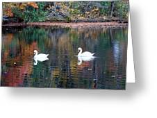 Swans At Betty Allen Greeting Card