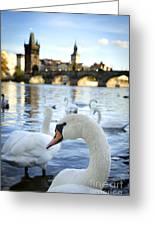 Swans On Vltava River Greeting Card by Jelena Jovanovic