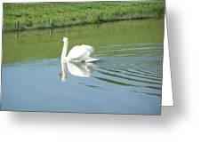 Swany Reflection Greeting Card