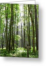 Swartwood Trail Greeting Card by Jennifer Compton
