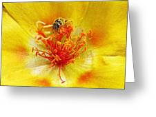 Sweat Bee On Rock Rose Greeting Card