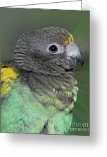 Sweet Baby Meyers Parrot Greeting Card